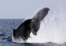 高知の海でダイビング&ホエールウォッチング★雄大な自然を感じるFD