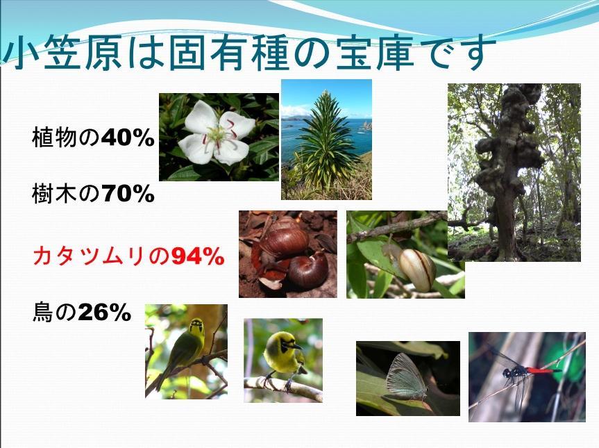 小笠原諸島④.JPG