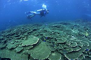南紀白浜のサンゴ