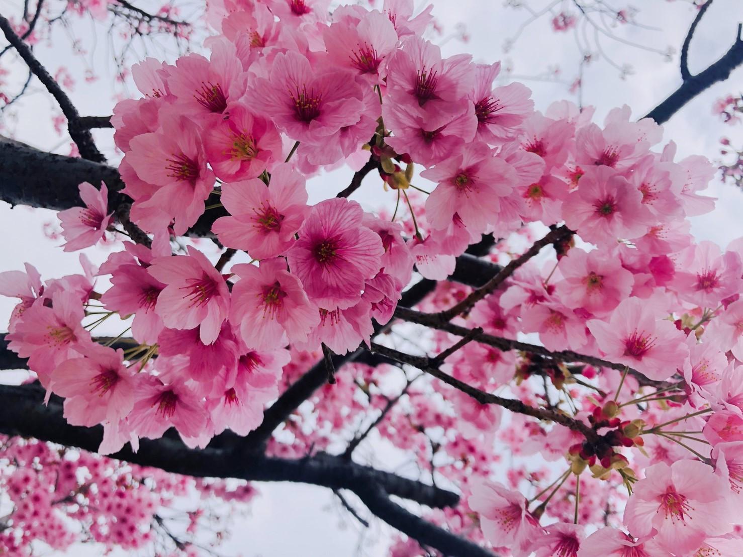 2019330お花見_190401_0046.jpg