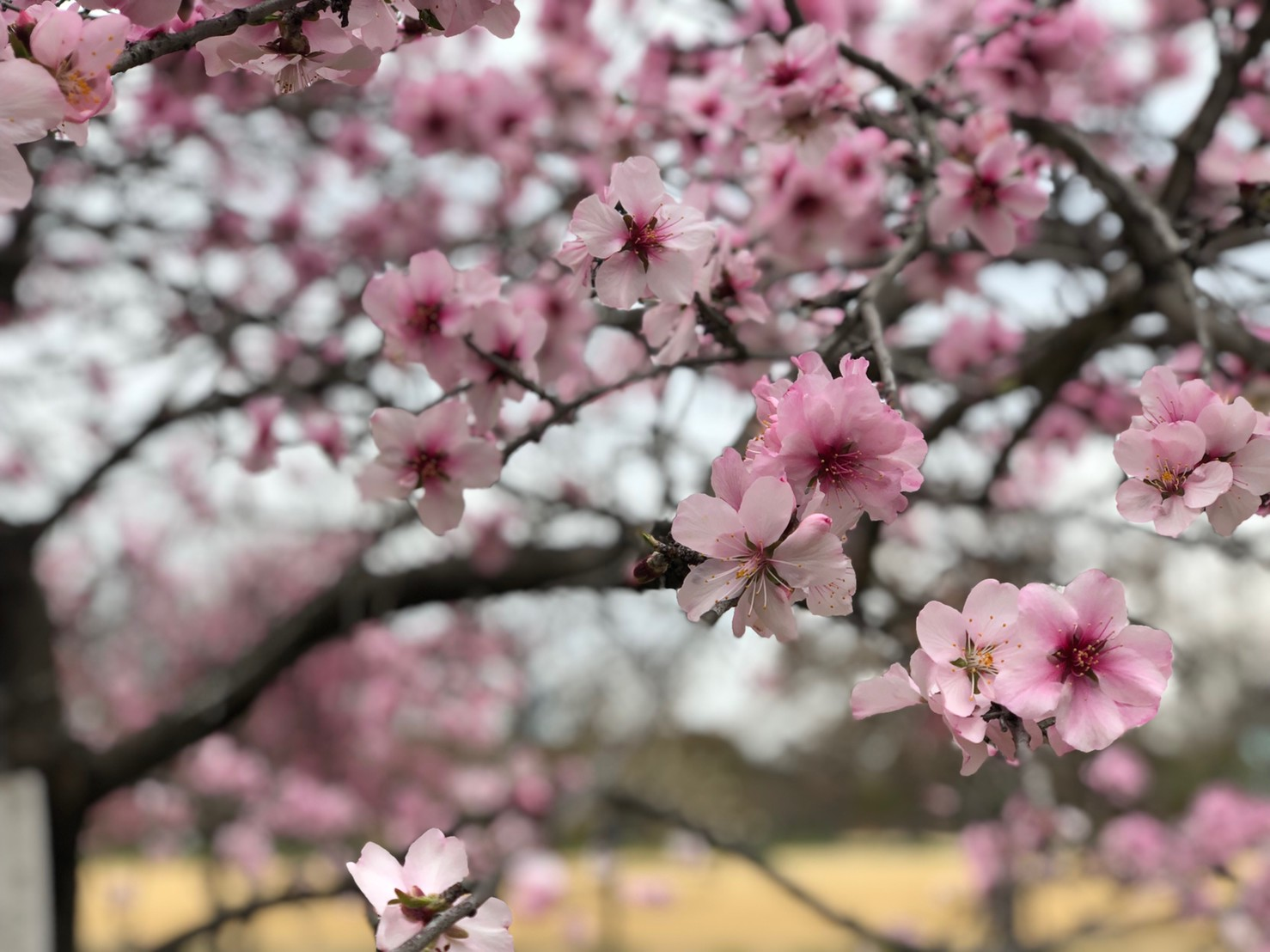 2019330お花見_190401_0110.jpg