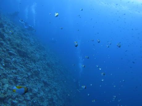 パラオの海中