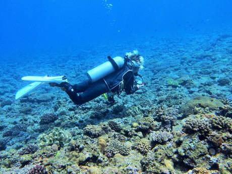 地面につかないので、珊瑚も傷つけない。